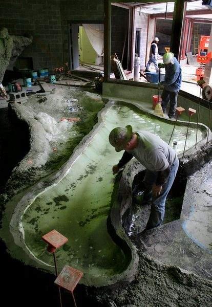 Rainforest Pool Under Construction