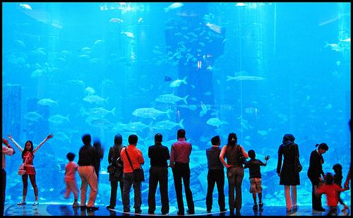 An aquarium at Atlantis Dubai
