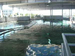 Overwater viewing
