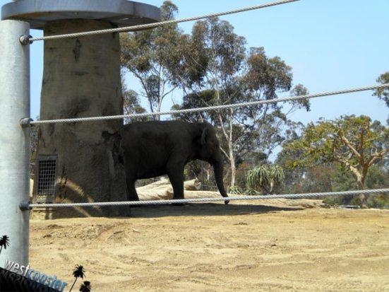 eo elephant