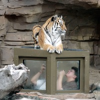 How Animal Behavior Drives Zoo Design