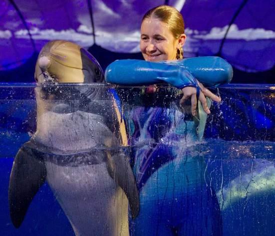"""Georgia Aquarium Opens """"AT&T Dolphin Tales""""   Designing Zoos"""