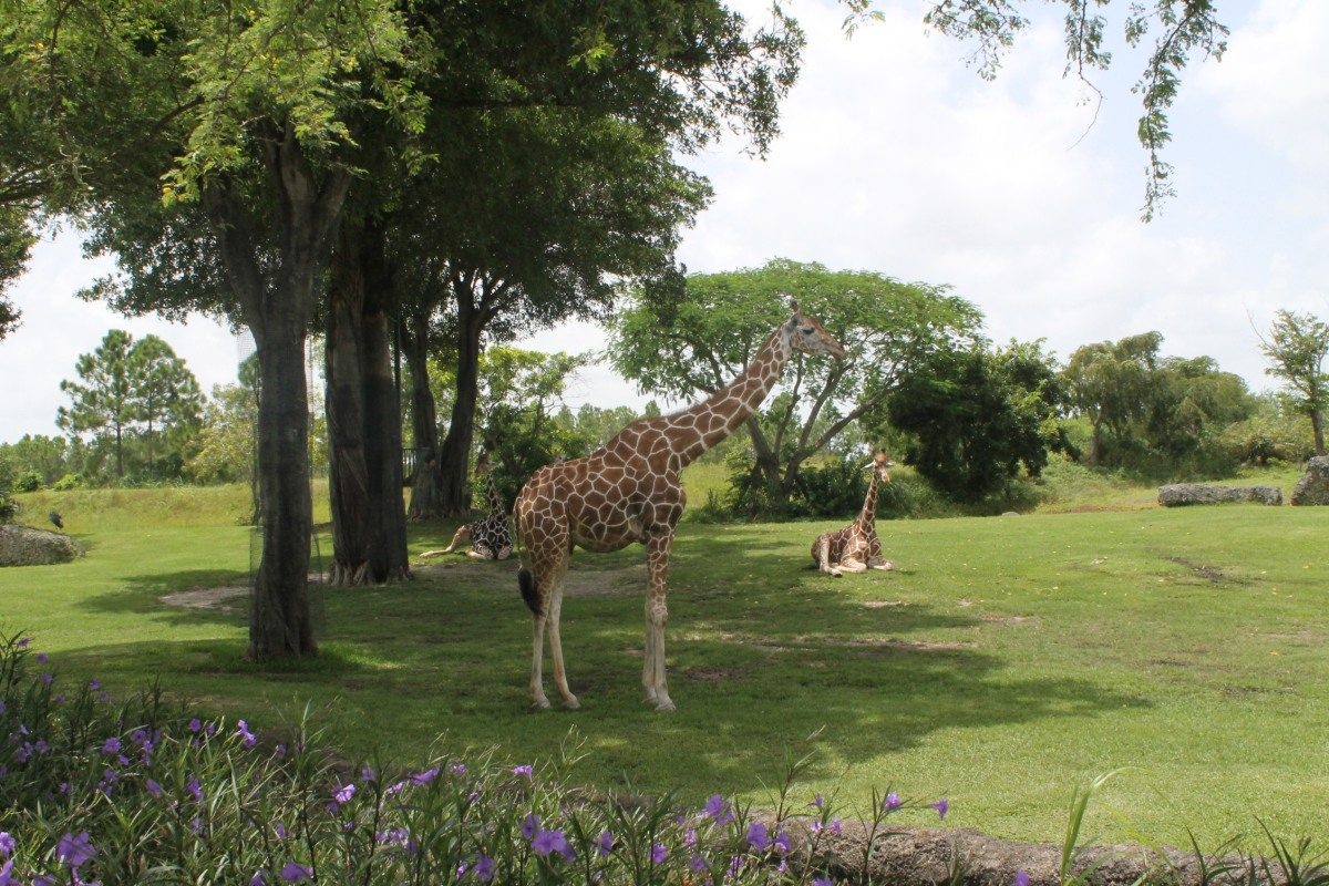 zoo design Houthoff zoo design designs and builds thematic decorations which you can find them in zoo's and public aquariums, theme parks, and tropical swimming pools.