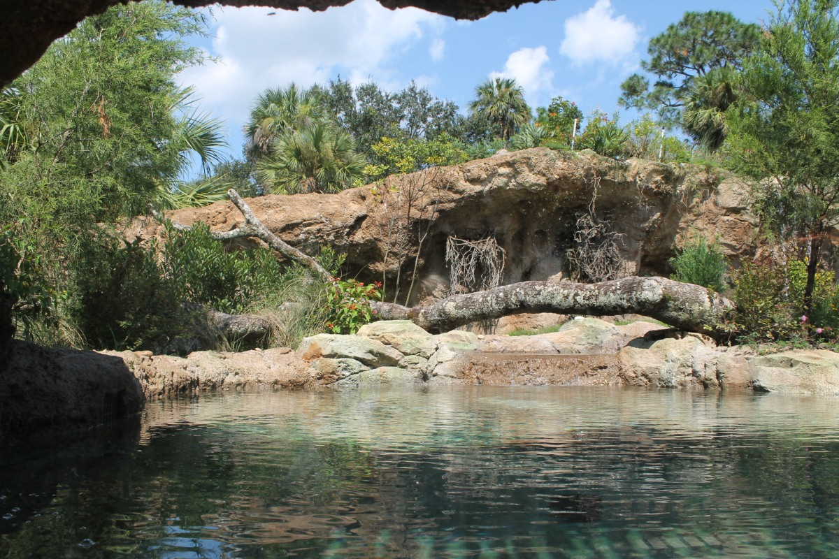 New River Otter Exhibit at Central FL Zoo! (UPDATED)