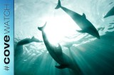 Study Shows Captive Dolphins Benefit from Interaction Programs & Shows