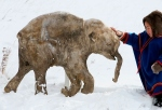 woolly-mammoth-baby
