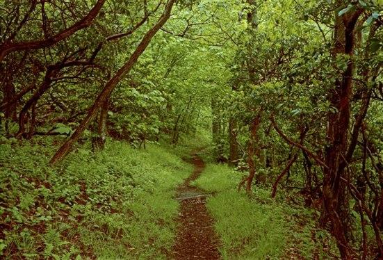 appalachian_trail1