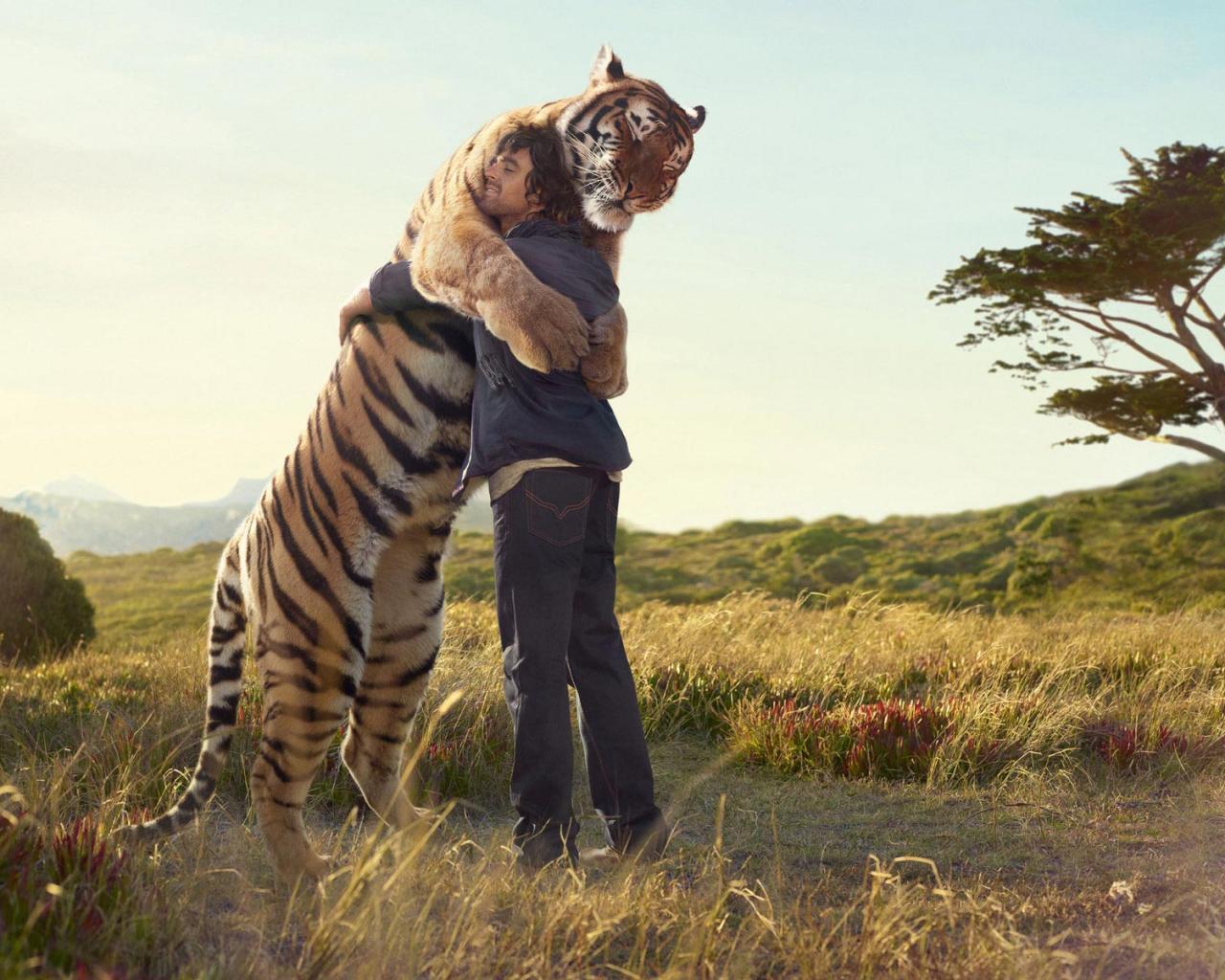 Animal Tiger Hug And 172330