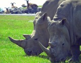A Rhino Encounter and #JustOneRhino