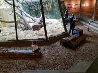 Indoor primate enclosure surrounded by wood chips--extending the primate enclosure into the people space. Nice way to make you forget you are inside.
