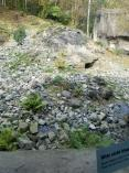 Snow leopard exhibit
