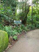 Entry path which is typical of the rainforest experience