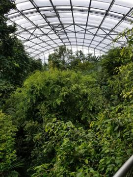 Massive massive indoor rainforest. Free ranging lemurs live in here but mostly stick to the roof structure.