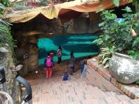 Inside the elephant house, underwater viewing for elephants
